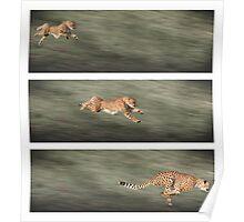Cheetah frames Poster