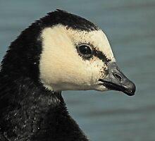 Sweet Goose by Robert Abraham