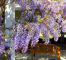 Wisteria In The Wind By Jonathan Green by Jonathan  Green