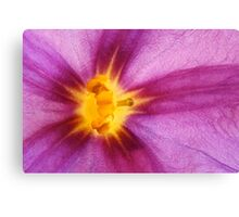 Purple and yellow flower macro abstract Canvas Print