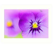 Violas Art Print