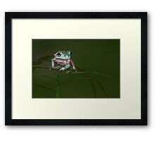 Precarious perch Framed Print