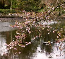 Springtime by Joyce Knorz