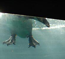 Penguin Feet by Jinx13
