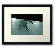 Penguin Feet Framed Print
