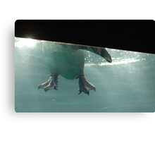 Penguin Feet Canvas Print