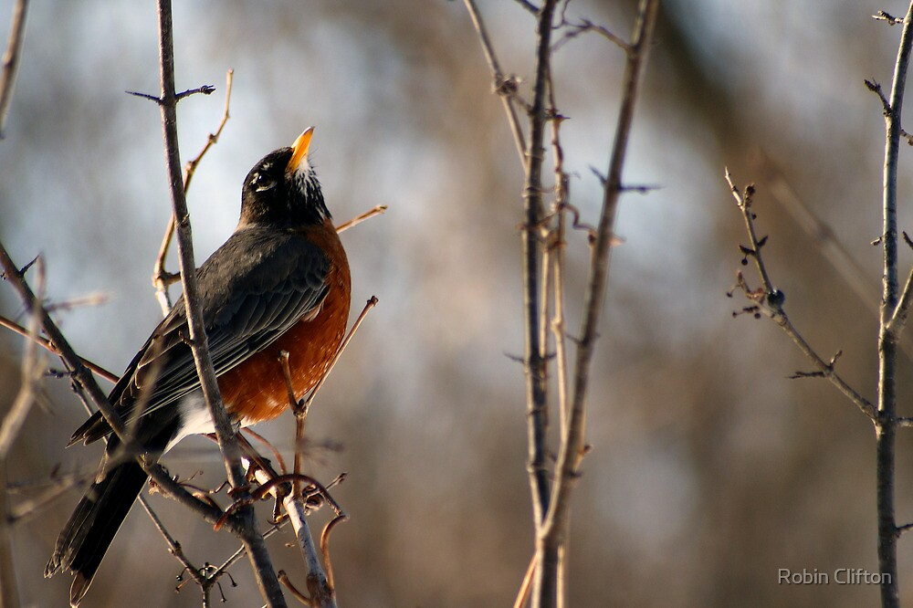 Good Morning Robin by Robin Clifton