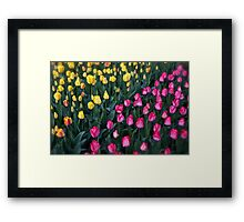 Spring Wonders  -  Botanical Garden of the Jagiellonian University in Kraków  by Brown Sugar. Favorites: 4 Views: 483 . Thank you friends ! Framed Print