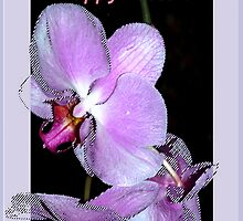 Purple orchids Easter card by ♥⊱ B. Randi Bailey