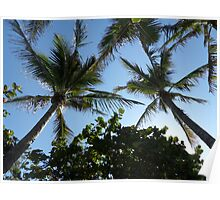 Palm Tree Covering Poster