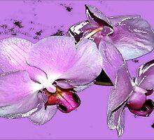 Purple orchids on purple background by ♥⊱ B. Randi Bailey