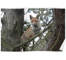 The Red TreeFox Poster