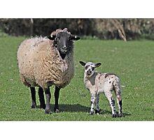 Ewe and Lamb Photographic Print