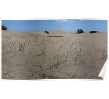 Seed Pods Sandy Poster