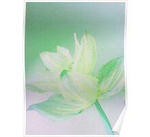 Soft asian blossom I Poster
