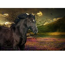 Marny In The Field Of Springtime Colours Photographic Print