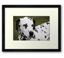 Spotty Dog Framed Print