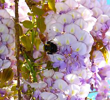 Busy Belushi Bee By Jonathan Green by Jonathan  Green