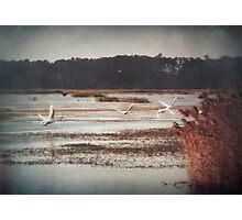 Swan Flight Photographic Print