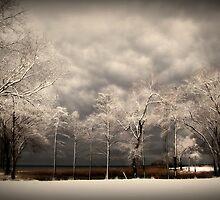 Winter Storm by Lea  Weikert