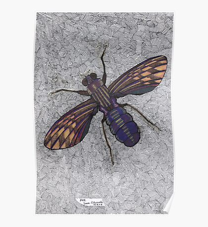 074 - FLY (Ink and coloured pencils) - 1998 Poster
