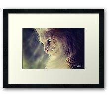 Lend Me a Kitten Framed Print