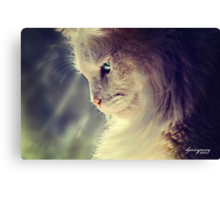 Lend Me a Kitten Canvas Print