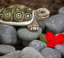 Turtle's  Pebble Garden by heatherfriedman