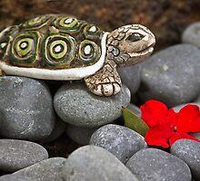 Turtle's  Pebble Garden by Heather Friedman