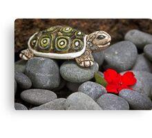 Turtle's  Pebble Garden Canvas Print