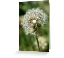 Silken Whispers Greeting Card