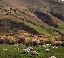 Hillside Sheep by Michelle McMahon