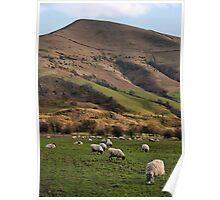 Hillside Sheep Poster