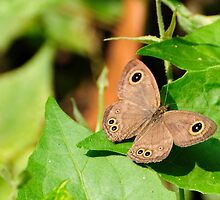 Butterfly on Green by srijanrc