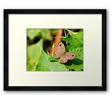 Butterfly on Green Framed Print