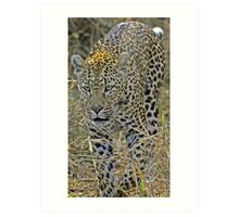 Leopard on the hunt-stalking! Art Print