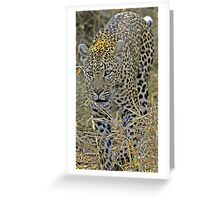 Leopard on the hunt-stalking! Greeting Card
