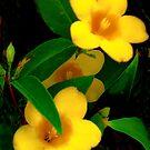 Mellow Yellow by Heather Friedman
