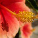 Loving Spring  by NicholeHoag
