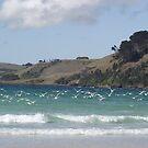 peacefulness at Boat Harbour beach, Tasmania by gaylene
