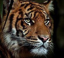 The Tiger by Natalie Manuel