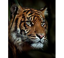 The Tiger Photographic Print