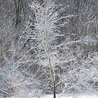 Winter Wonder by Michelle BarlondSmith