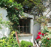 Rustic Window by Alison Murphy