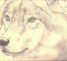 Wolves Wonder by windsprite17
