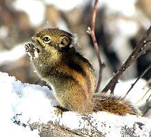 Squirrel, Emei Shan, Sichuan, China by DaveLambert