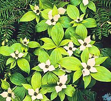 DOGWOOD by Chuck Wickham