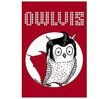 Owlvis - Owl Illustration  Photographic Print