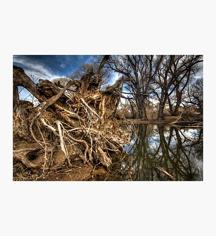 Rooted...but not the one by Brad Grove Photographic Print