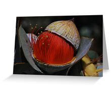 Eucalyptus macrocarpa  Greeting Card